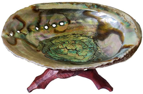 "5""- 6"" Abalone Shell incense burner with stand"