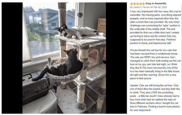 cat tree review