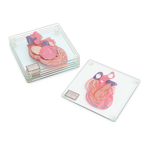 Anatomic Heart Specimen Coasters