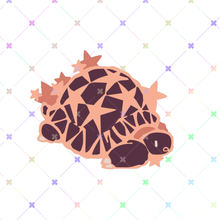 Load image into Gallery viewer, Star Tortoise