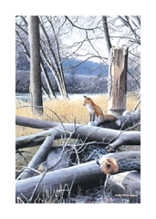At Home in The Wild - Greeting Card Set (8 Cards and Envelopes)