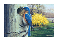 Wild Birds - Greeting Card Set (8 Cards and Envelopes)