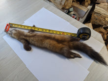 Load image into Gallery viewer, Tanned Marten Pelt