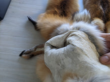 Load image into Gallery viewer, Tanned Red Fox Pelt