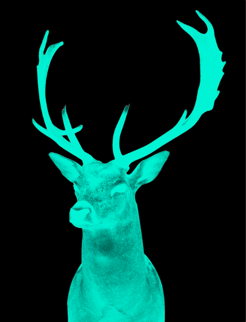 Stag Night Green