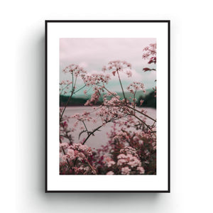 Pink and blue pastel color photography print of flowers