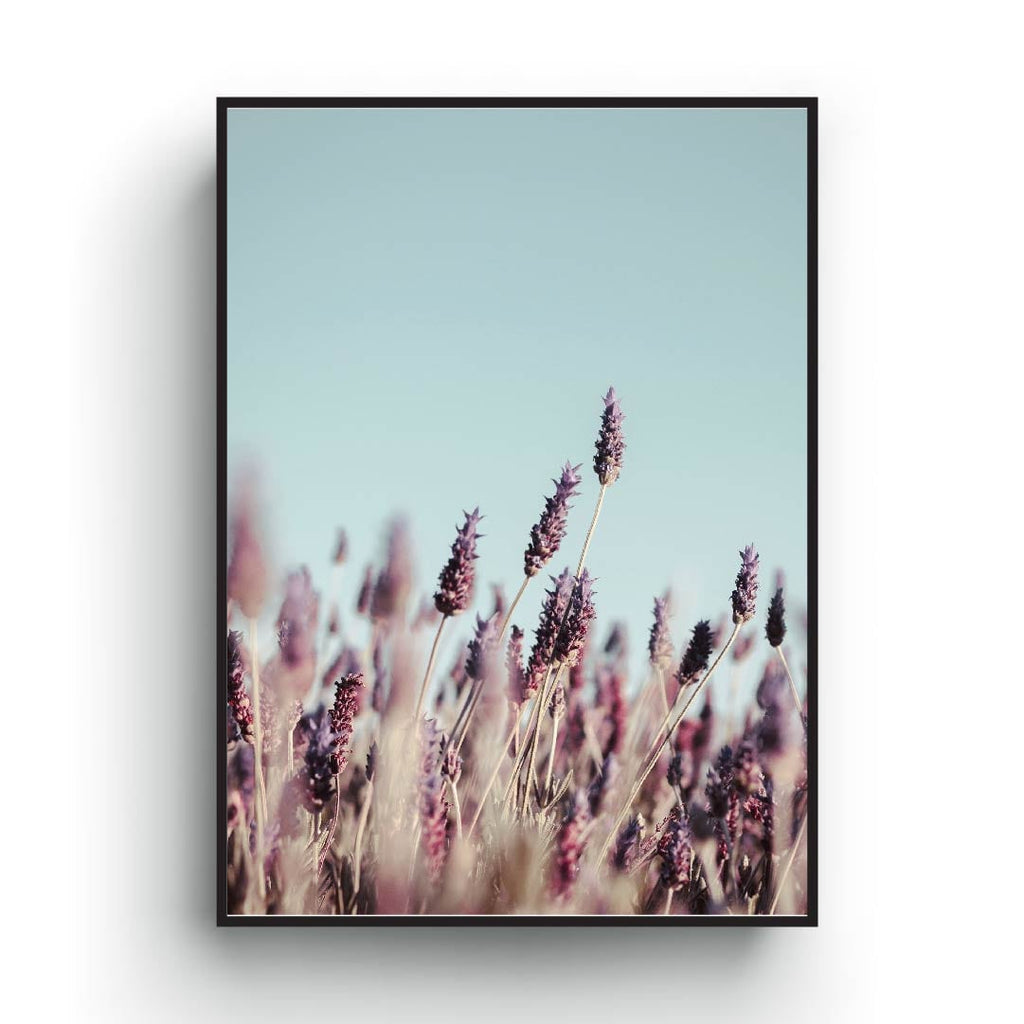 Pink and blue pastel color poster of summer field flowers