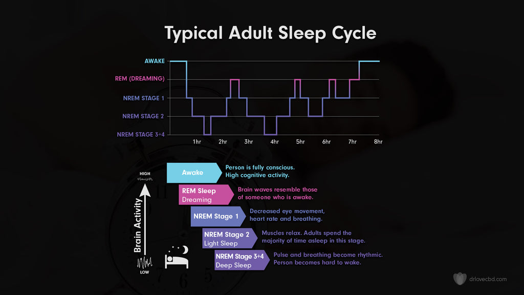 infographic showing the different stages of sleep mapped on a timeline