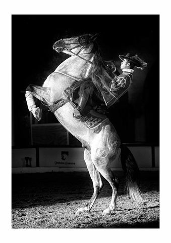 The Spirit of Andalusian Horse III