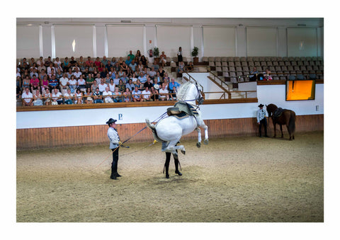 The Spirit of Andalusian Horse II