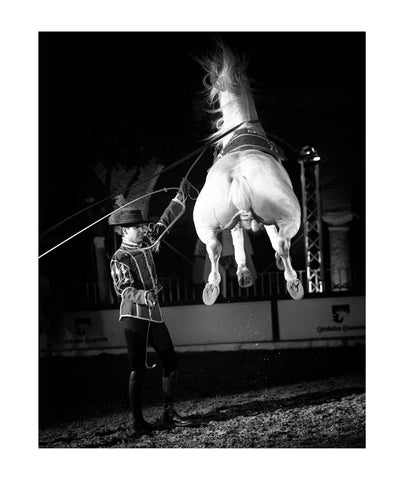 The Spirit of Andalusian Horse IV