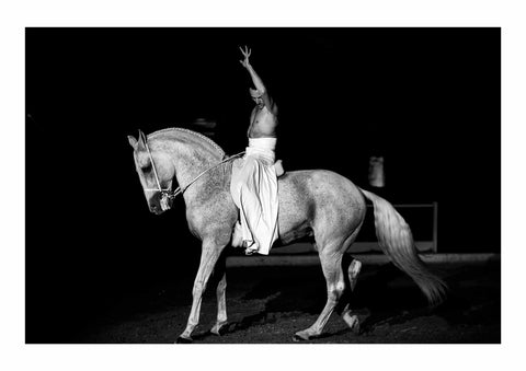 The Spirit of Andalusian Horse VII
