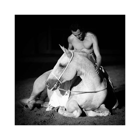 The Spirit of Andalusian Horse VIII