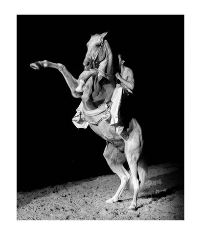 The Spirit of Andalusian Horse V