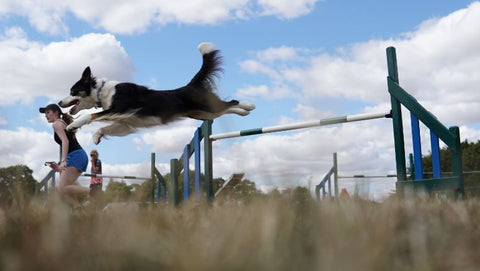 YKC  Agility Training Day with Jen Slade and Lee Gibson- 7th August 2019