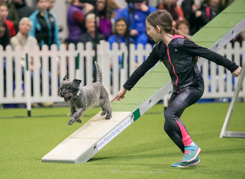Young Kennel Club Crufts 2019 Agility Dog of the Year Qualifier - Newark