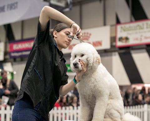 Scottish Kennel Club 2019 YKC Grooming