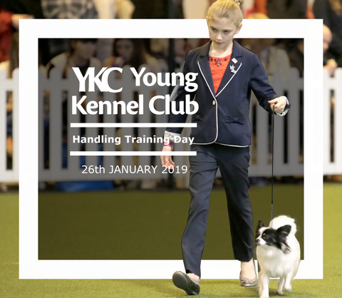 Young Kennel Club Crufts 2019 Handling Qualifier – Stoneleigh