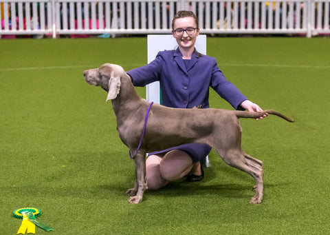 Young Kennel Club Crufts 2020 Handling Qualifier – Newark
