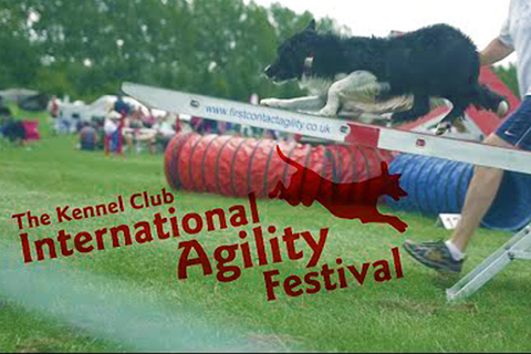 YKC Agility with Lee Gibson on 9th August 2017