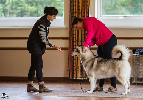 Young Kennel Club Junior Handling Training with Marina Scott - The Kennel Club
