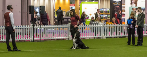 Young Kennel Club Crufts 2020 Obedience Qualifier - Newark
