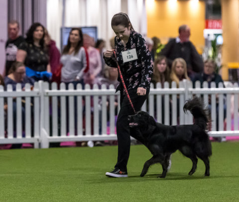 Young Kennel Club Crufts Crossbreed 2020 Qualifier – Manchester Family Pet Show