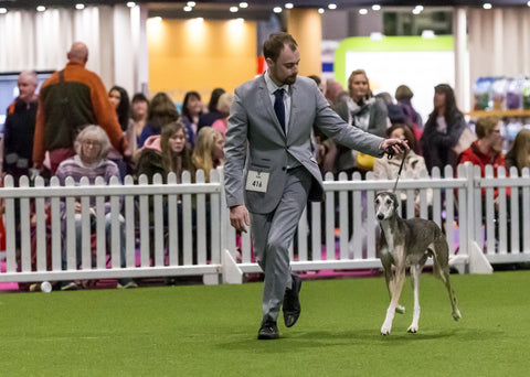 Young Kennel Club Crufts Crossbreed 2020 Qualifier – International Agility Festival