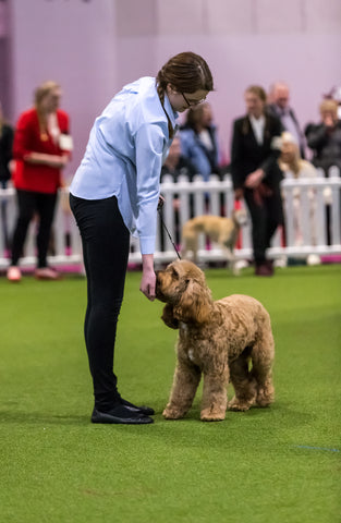 Young Kennel Club Crufts Crossbreed 2020 Qualifier – East of England YKC Activity Camp