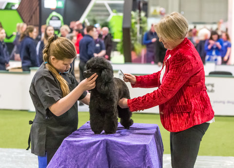 Young Kennel Club Crufts Grooming Qualifier – Perth, Scotland