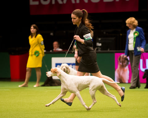 Have a Go Dog Showing: Manchester Dog Show Society 2020