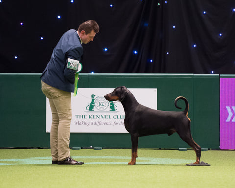 Have a Go Dog Showing: Leeds City & District Canine Association 2019