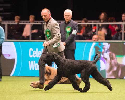 Have a Go Dog Showing: Scottish Kennel Club 2020