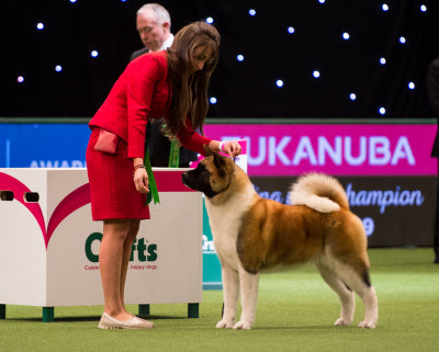 Have a Go Dog Showing: Birmingham Dog Show Society 2019