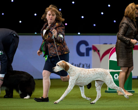 Have a Go Dog Showing: Windsor Dog Show Society 2020