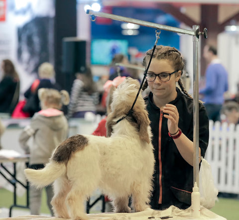YKC Grooming Qualifier Discover Dogs 21 October 2018