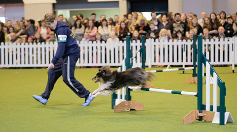 Young Kennel Club Deena Freeman Indoor Agility Training Day - 11th February 2018