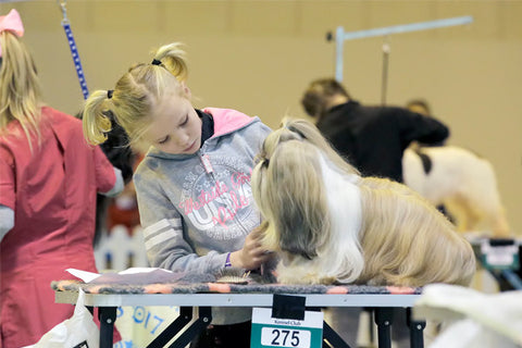 Young Kennel Club Crufts Grooming Qualifier