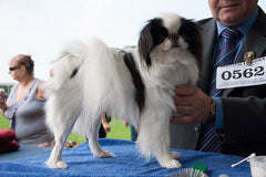 Have A Go Dog Show The Kennel Club