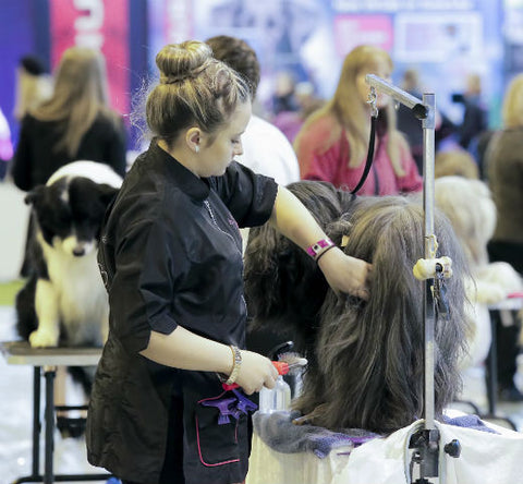 Dog Grooming Training Day with Linda Barker
