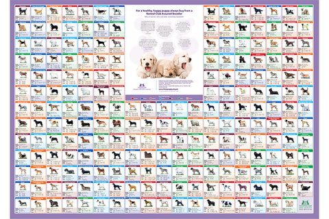 A-Z Pedigree Dog Breed Poster - The Kennel Club