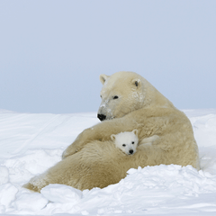 Momma and Baby Polar Bear