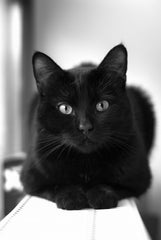 Lovely Black Cat