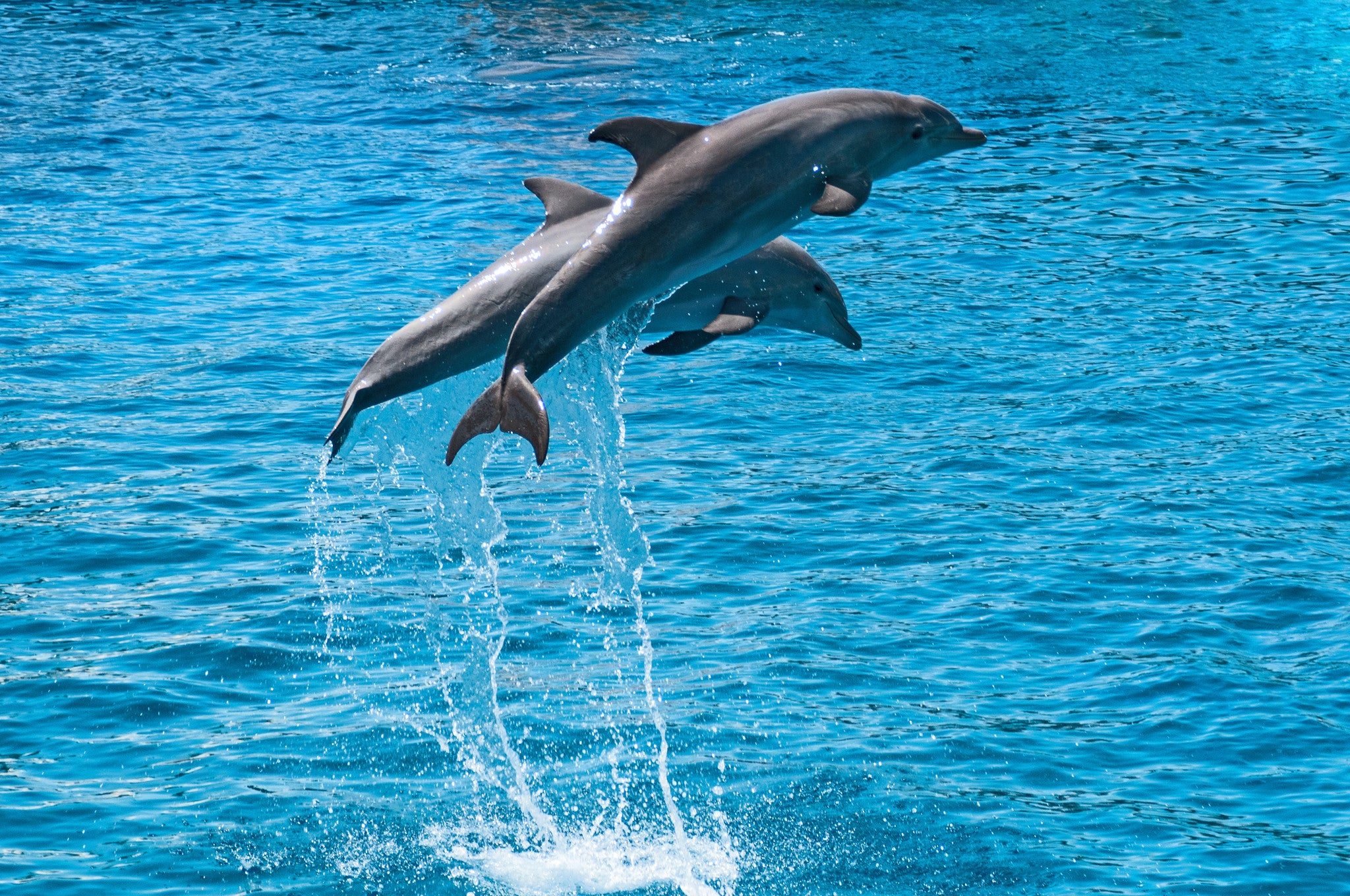 Dolphins in Flight