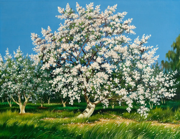 Apple Blossom Tree