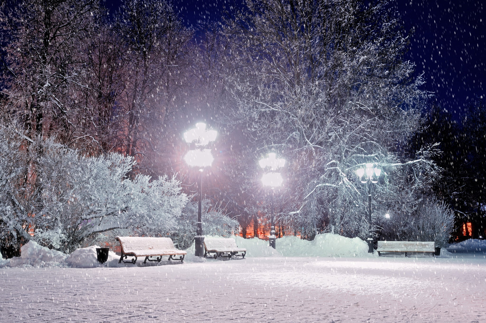 A Winter Evening in the Park