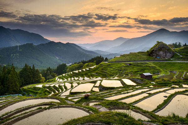 Rice Paddies in Kumano