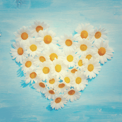 Dandelion Shaped Heart