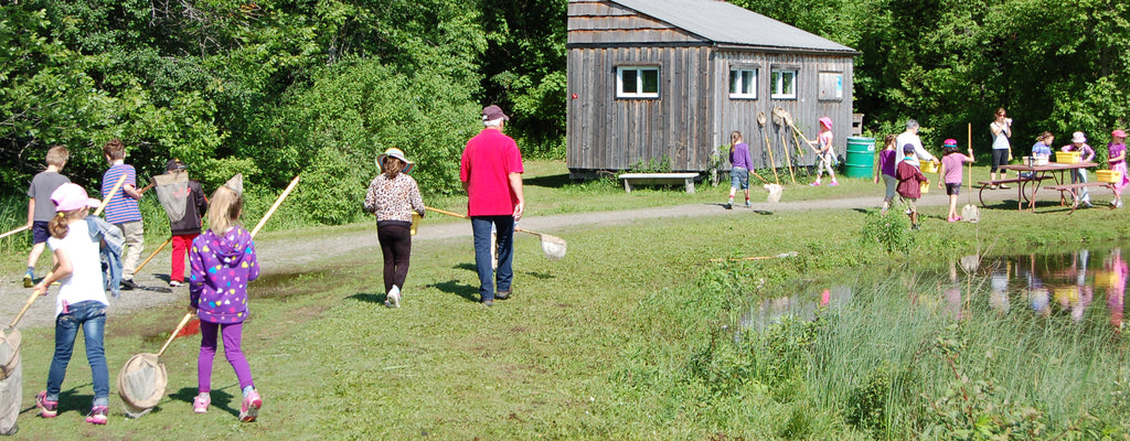 children pond dipping with nets