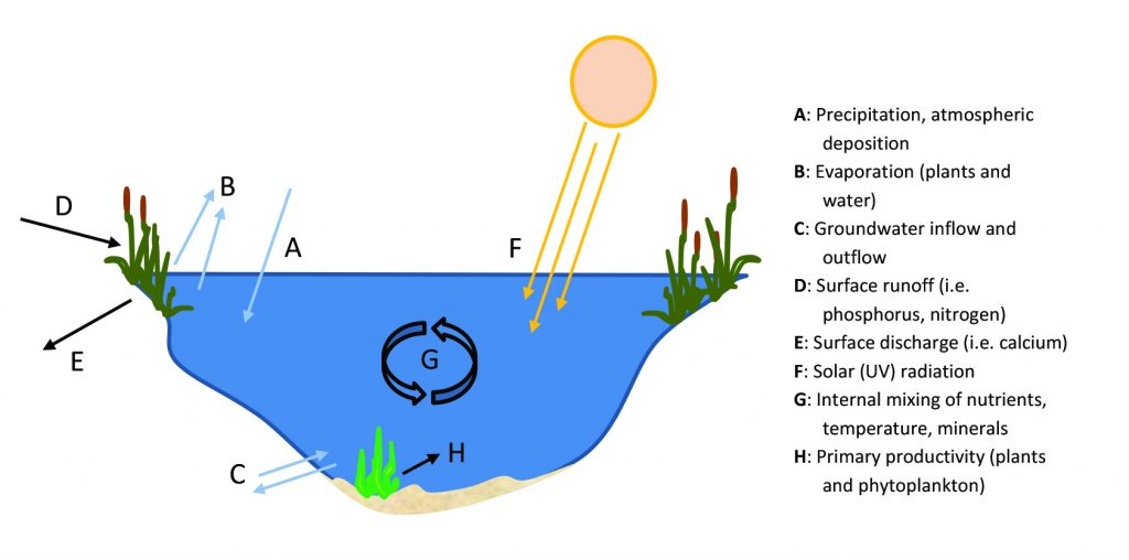 how a lake functions